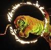Цирки в Дубовке